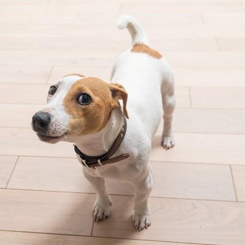 tipos de coleira para cachorro de pescoço