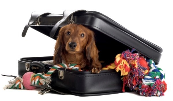 viajar com cachorro de avião