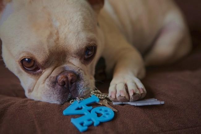 acessórios para cães e humanos