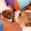 dois_cachorros