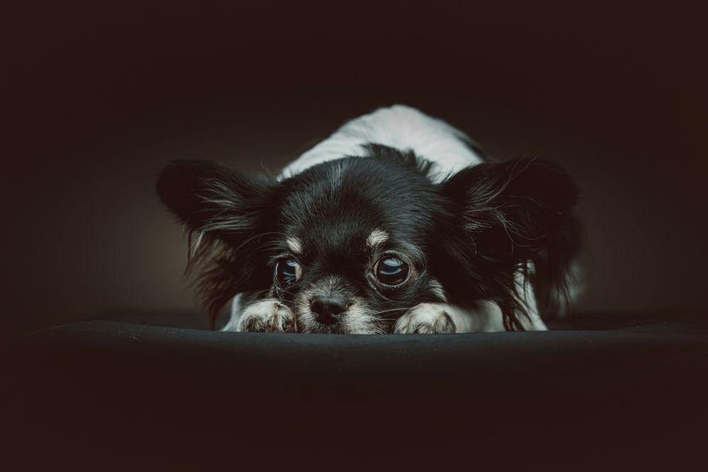 cachorro enxerga no escuro